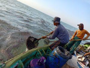 Pertamina Lalai, Kebocoran Minyak Sebabkan Dampak Buruk Kesehatan Bagi Nelayan Karawang.