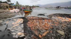 Keramba Jaring Apung Perusak Danau Toba Hendak Digeser Ke Kabupaten Toba, Warga Protes Keras Bupati Darwin Siagian. - Foto: Ikan Mati Di Kawasan Danau Toba (KDT) sejak Kehadiran Keramba Jaring Apung (KJA) di Tao Toba. (Net)